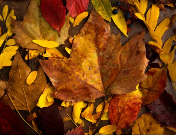 4. Canva - Fall Leaves